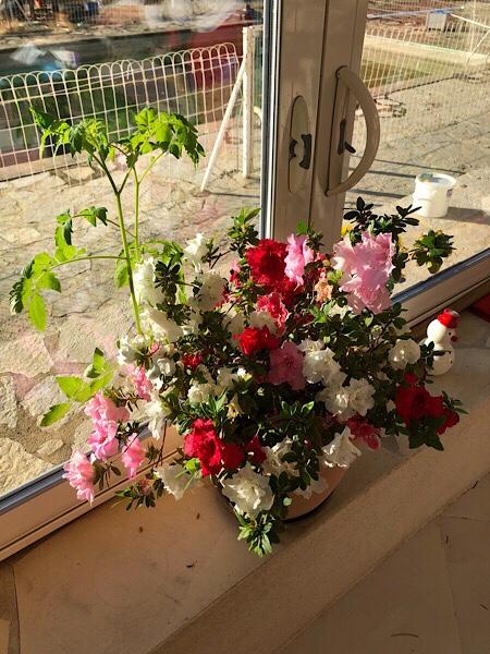 Plante potag re ou jardin fleuri le blog fifi ou - Ou planter la rhubarbe dans le jardin ...